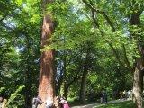 Autour du séquoïa